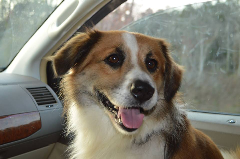 Tripp~Adopted!