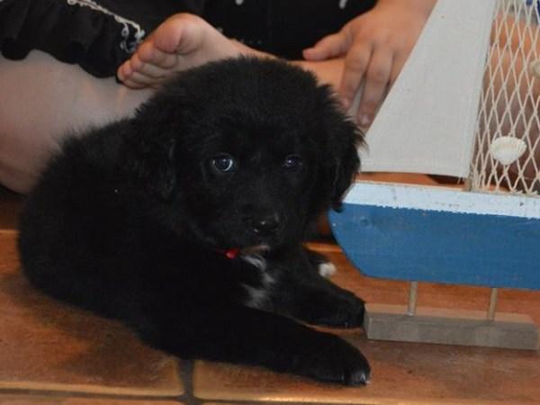Black Beard~Adopted!