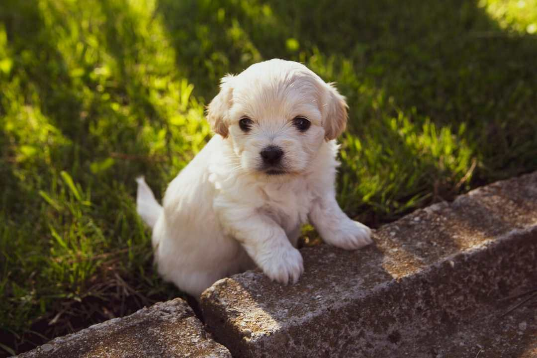 How to Deworm Newborn Puppies at Home?