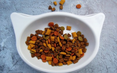 Top Five Reasons: Why You Should Make Homemade Dog Food