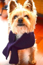 """For a last minute """"Add On"""", grab a scarf. Pick your pooch's favourite colours and let him greet your guest with a wagging tail!"""