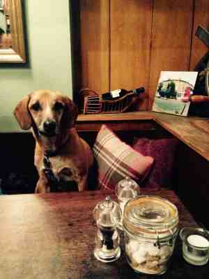 Dog Friendly Cafes and Restaurants in London - Konnigans Restaurant