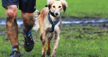 Muddy Dog Challenge Battersea