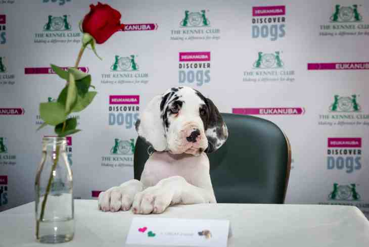 Puppy speed dating at the Kennel Club