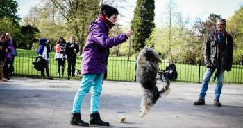 London's Talented Canines Delight at Dog Factor 2016 (1)