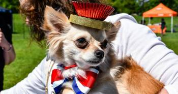 10 Of The Most Adorable Alternative Best Bark Off Awards