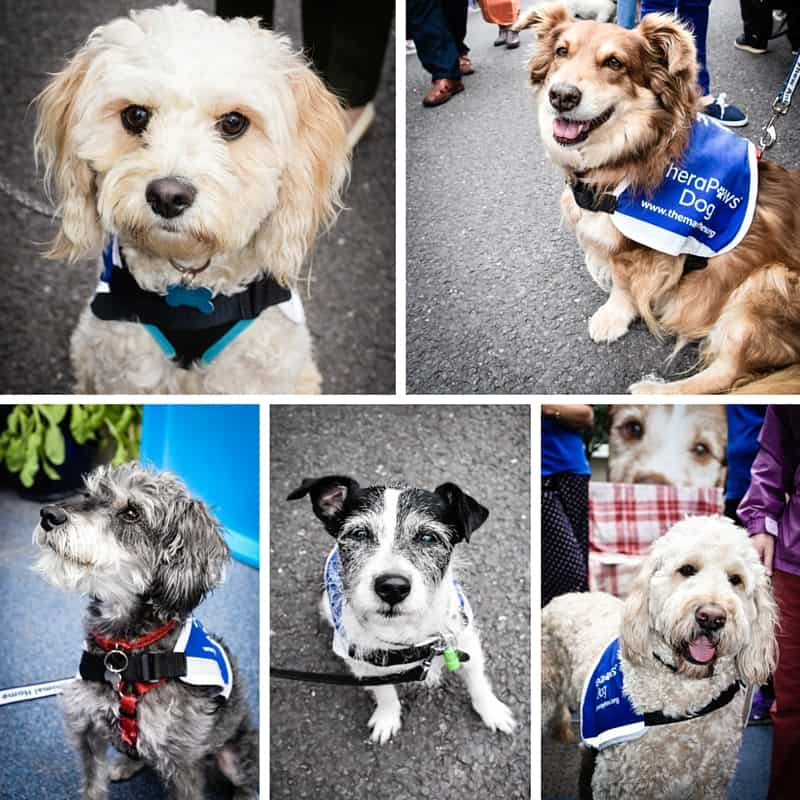 Therapaws - The Mayhew Animal Home