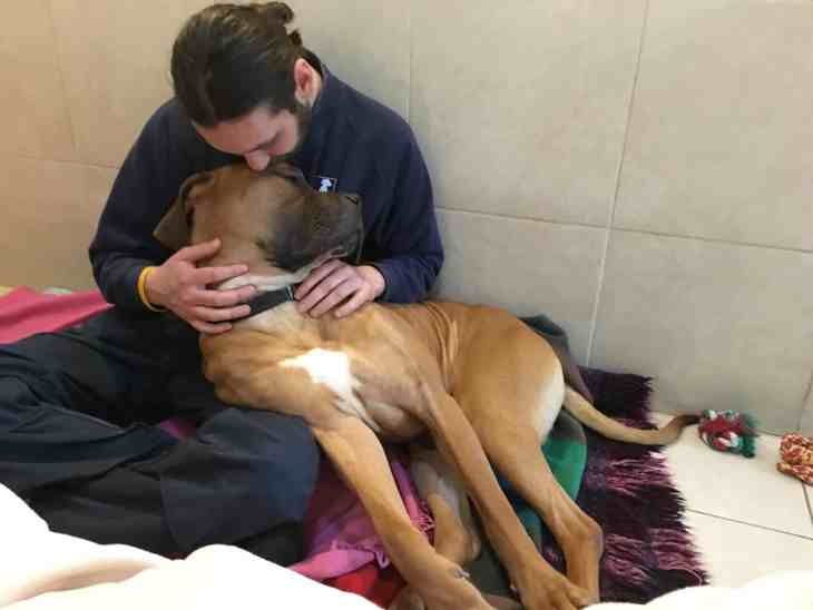 Chester cuddles kennels staff