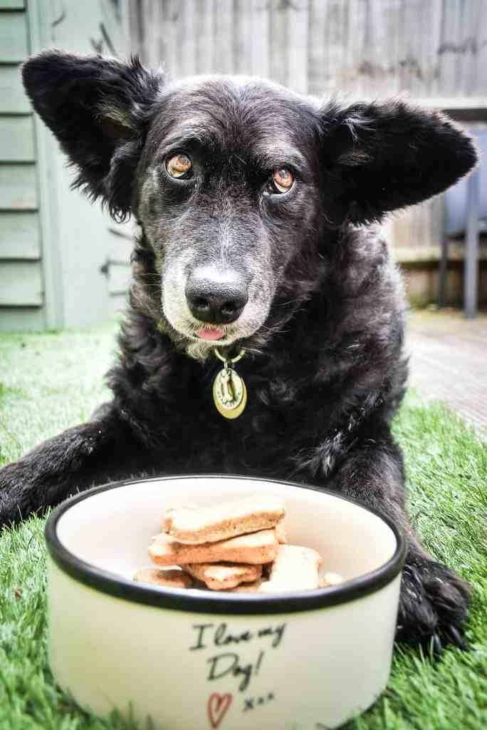 Wellybix Dog Biscuits - Belinha