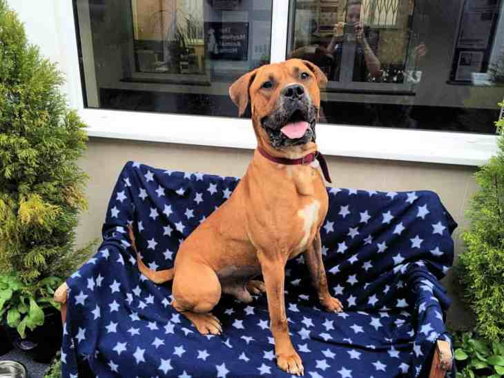Chester Waits For A Home