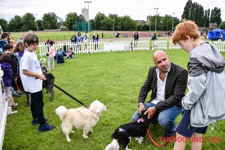 Judge Marc The TV Vet - Hounds On The Heath