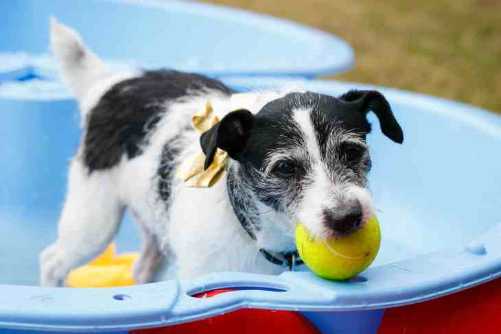 London Dog Events - Hounds on the Heath Charlie