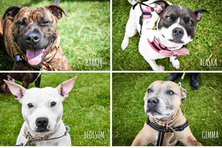 Sweetest Staffies 1 - Hounds On The Heath
