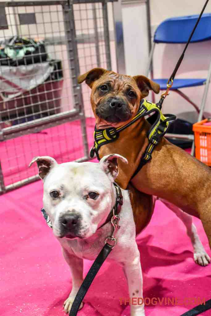 Discover Dogs 2016 - Louis 2