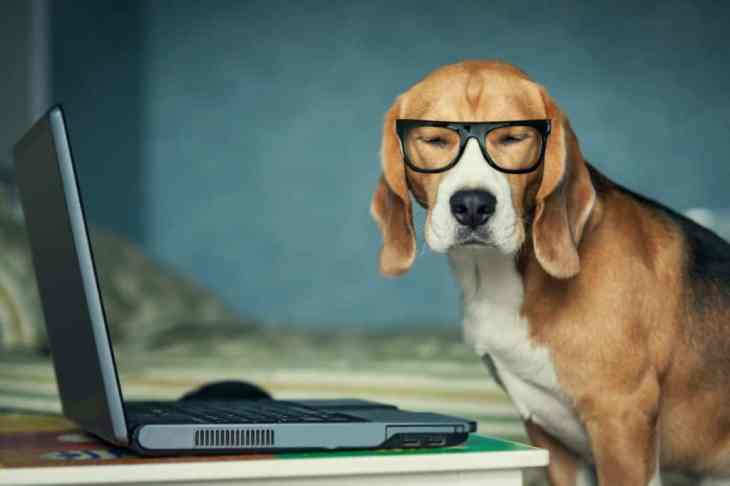 london-dog-events-2017-bring-your-dog-to-work-day