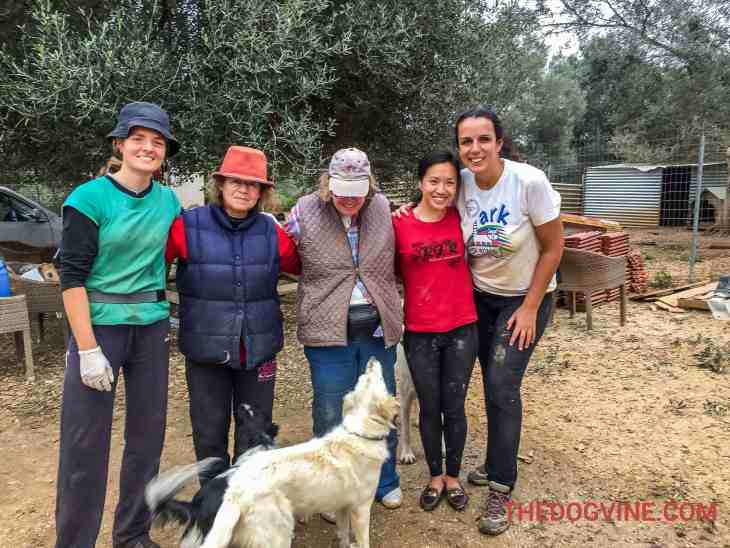 Animal Rescue Kefalonia Volunteering 5