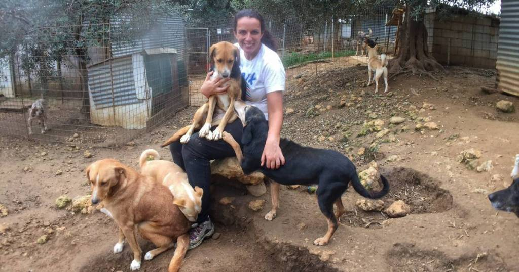 An Amazing Experience Volunteering At Animal Rescue Kefalonia