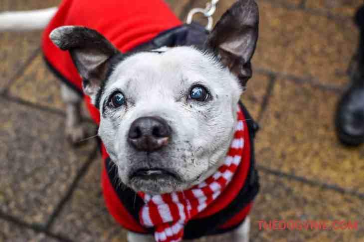 All Dogs Matter Valentines Walk-22