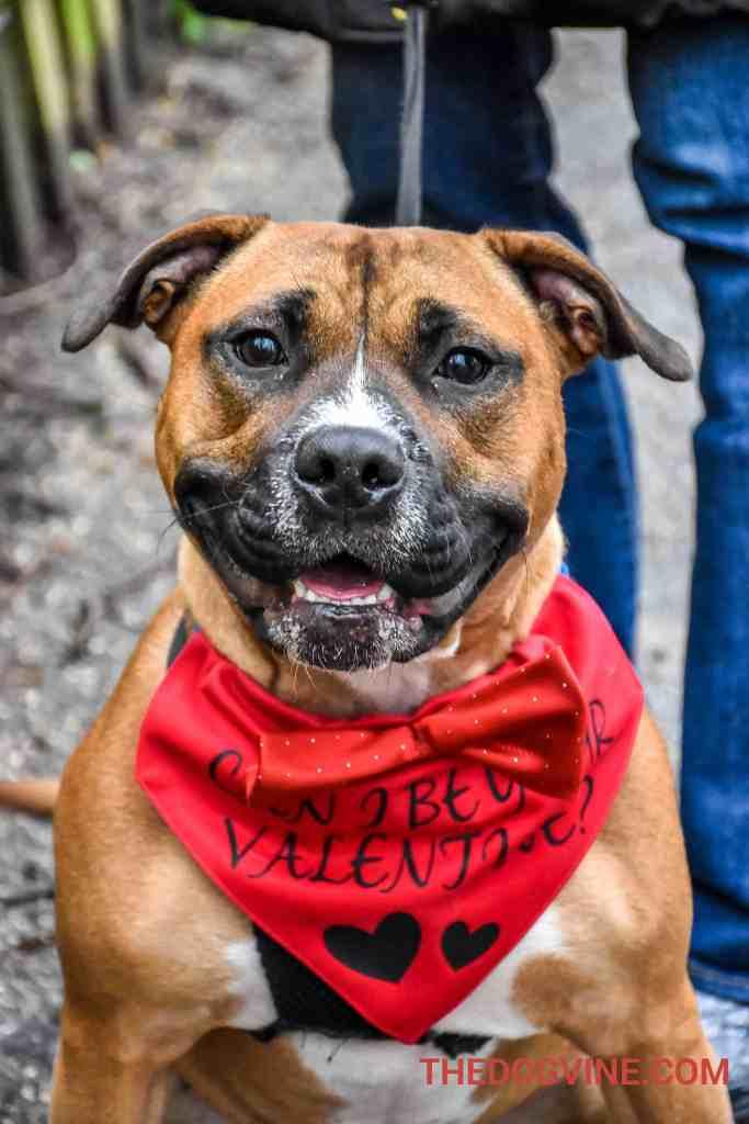 All Dogs Matter Valentines Walk-23