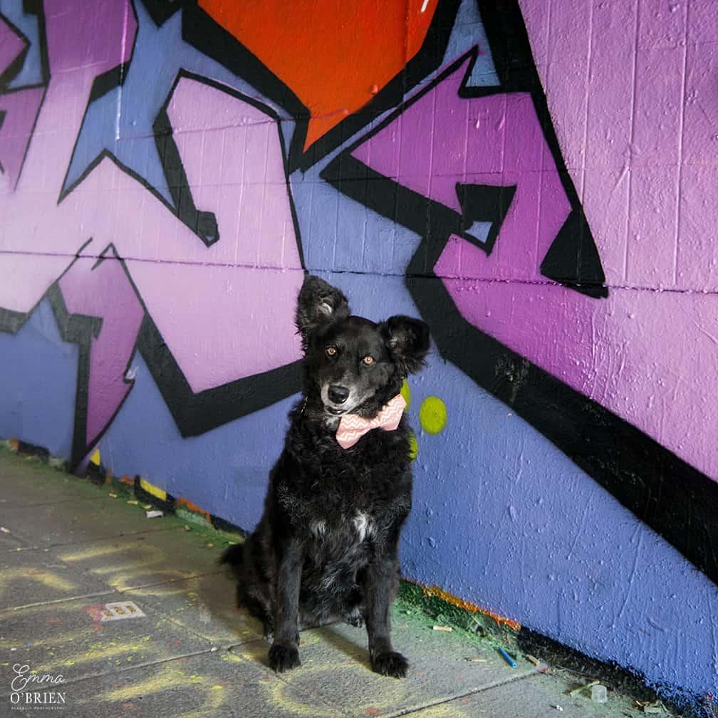 Belinha London Dog Photo Shoot with Emma OBrien_0073