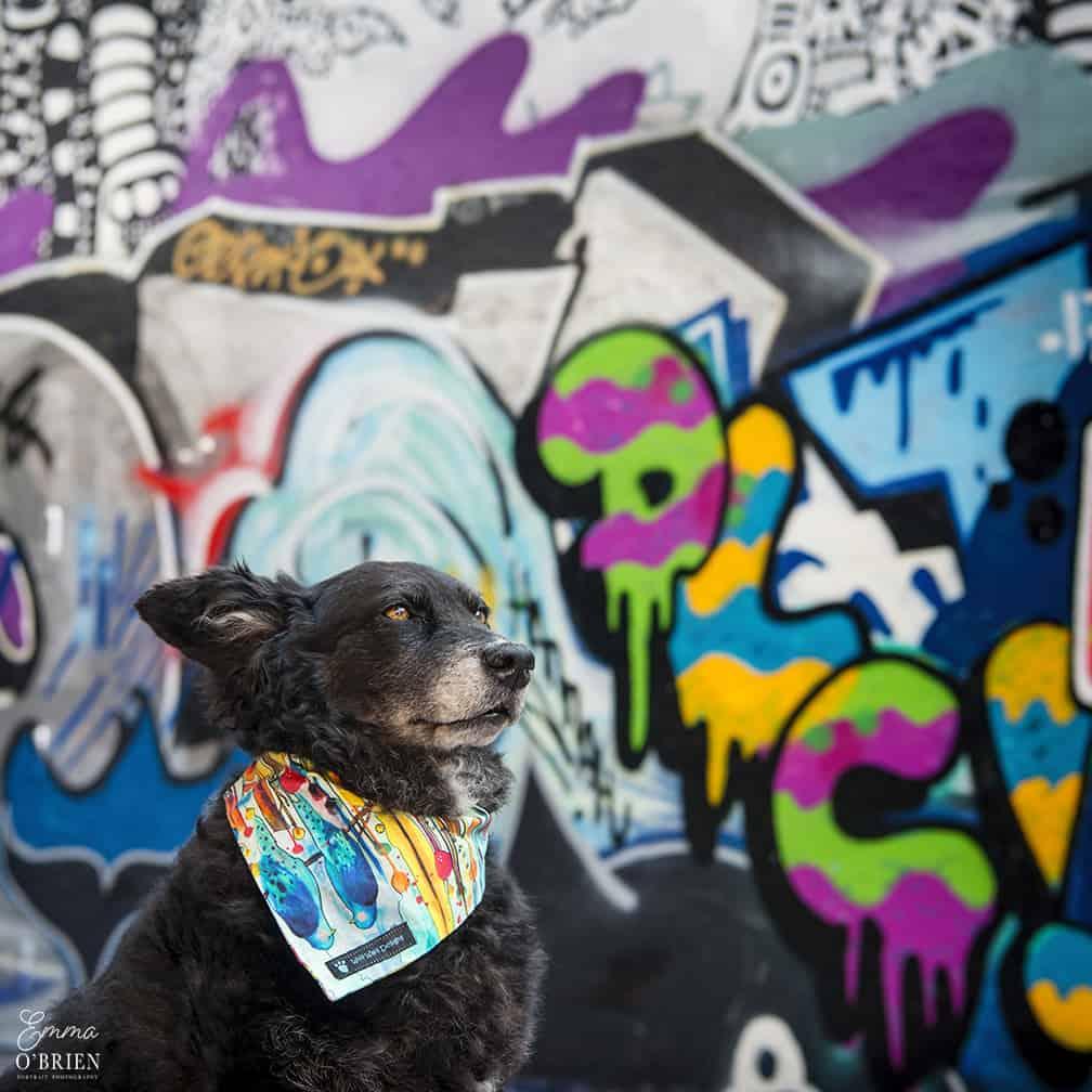 Belinha London Dog Photo Shoot with Emma OBrien_0154