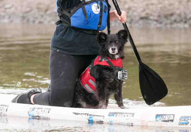 Dog and Human Paddle Boarding 00025