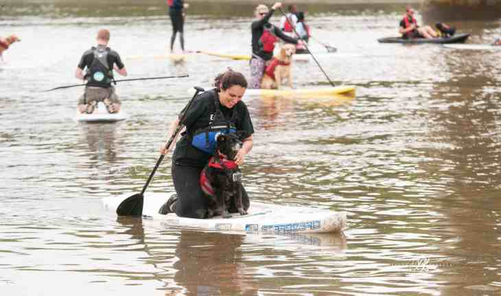 Dog and Human Paddle Boarding 00028