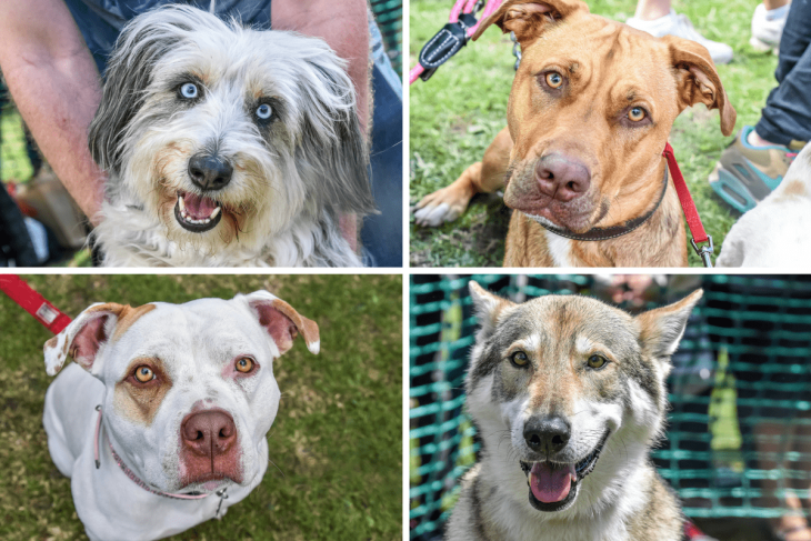 Most Engaging Eyes - Great Hampstead Bark Off 2017