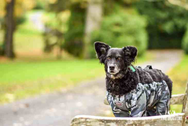 The Dogvine - Dog Trousers Review 13