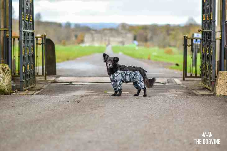 The Dogvine - Dog Trousers Review 25