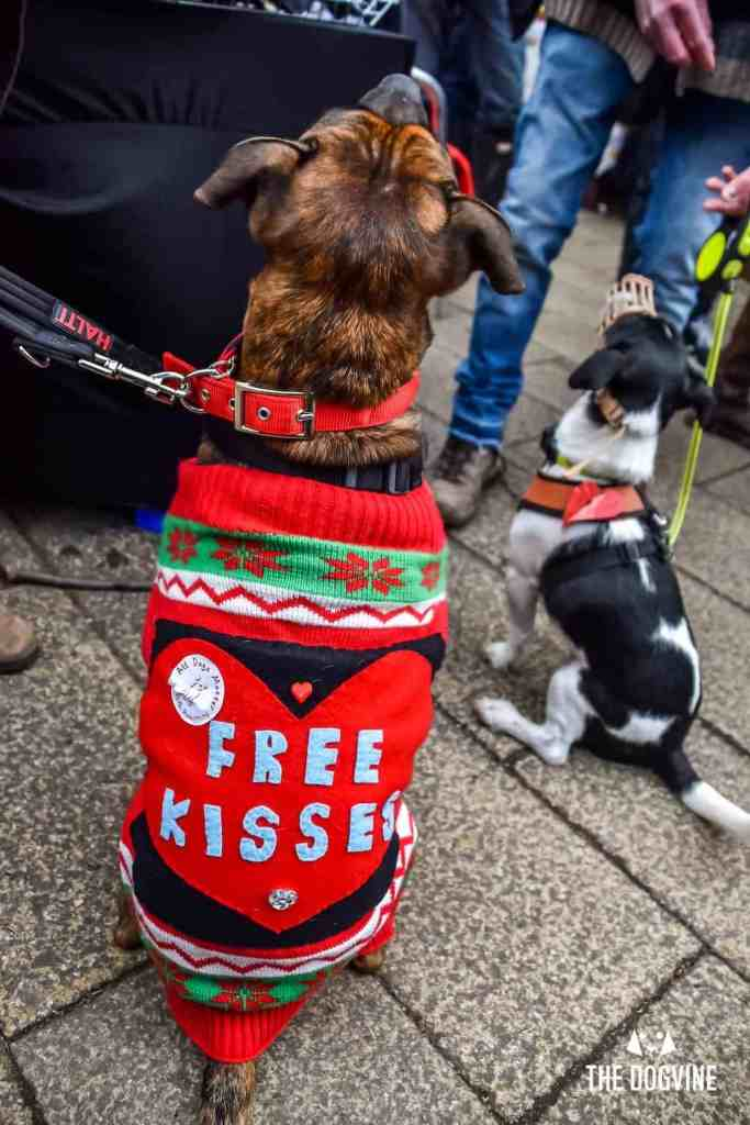London Dogs Celebrate Valentines Day On The All Dogs Matter Valentines Walk - London Dog Event 109