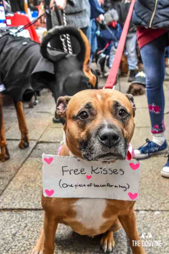 London Dogs Celebrate Valentines Day On The All Dogs Matter Valentines Walk - London Dog Event 21