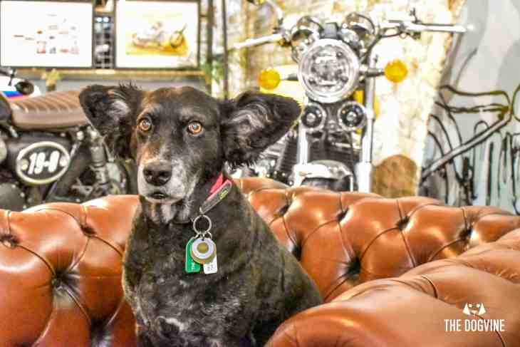 Dog-Friendly Shoreditch Mutts and Motorcycles At The Bike Shed 13