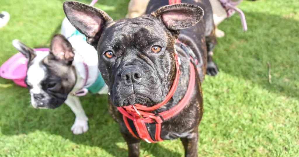 The London Dog Meetups Guide For You And Your Dog