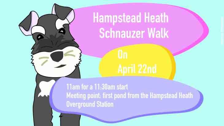 London Dog Events - Hampstead Heath Schnauzer Walk No 6