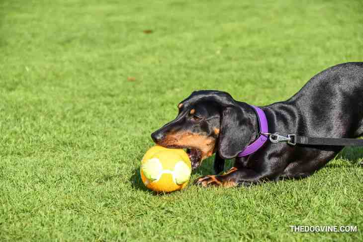 The London Dog Meetups Guide For You And Your Dog - Things to Do With Your Dog 21