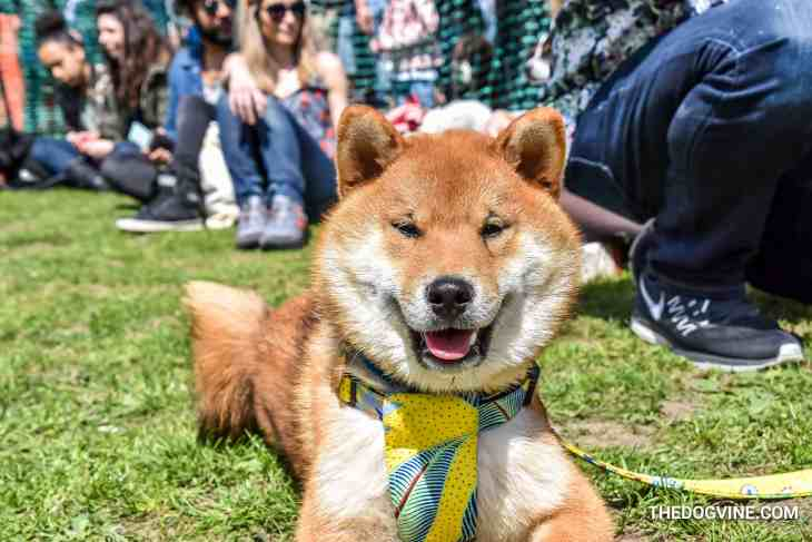 The London Dog Meetups Guide For You And Your Dog - Things to Do With Your Dog 25