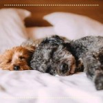 DOG-FRIENDLY LONDON HOTELS