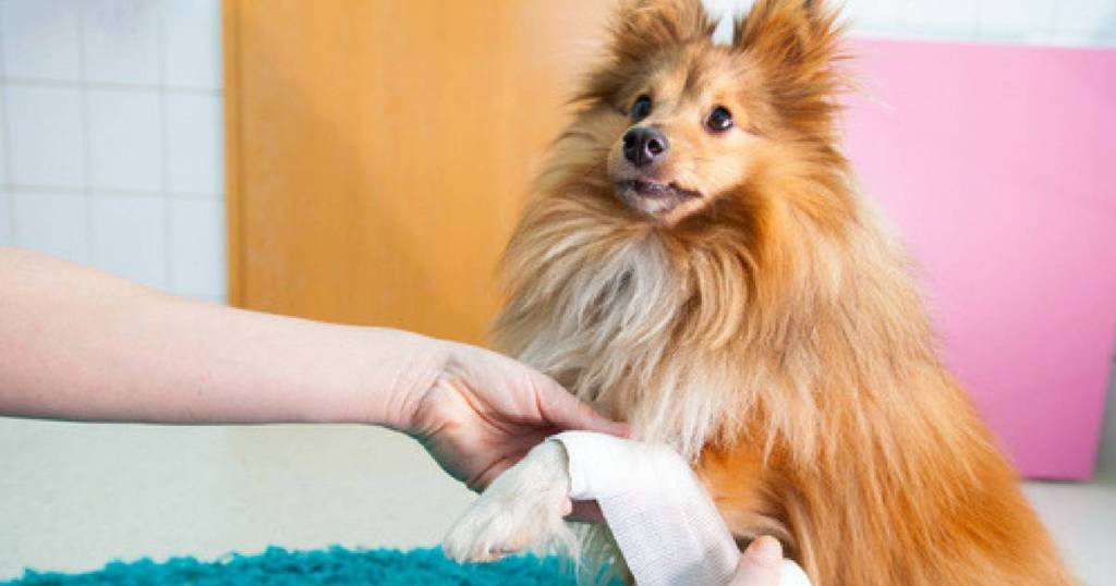 Guide To Where To Do A Dog First Aid Course In London