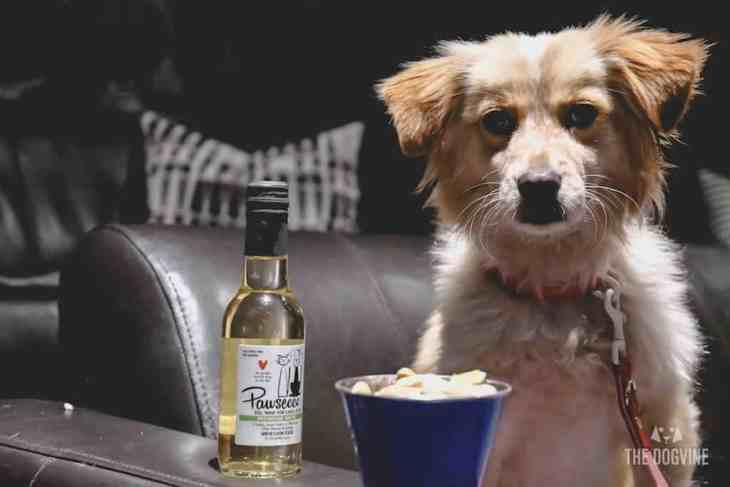 London Dog-Friendly Cinema At The Exhibit Puppy Love Brunch Review 17