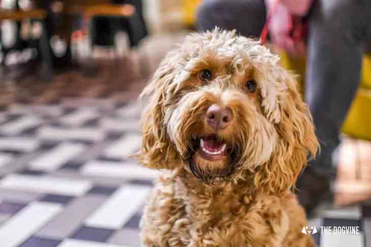Picturehouse Central Dog-Friendly Cinema Isle of Dogs 10