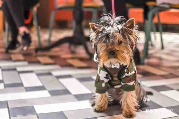 Picturehouse Central Dog-Friendly Cinema Isle of Dogs 12