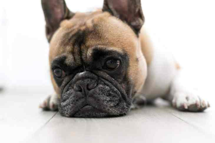 Where To Do A Dog First Aid Course in London 4