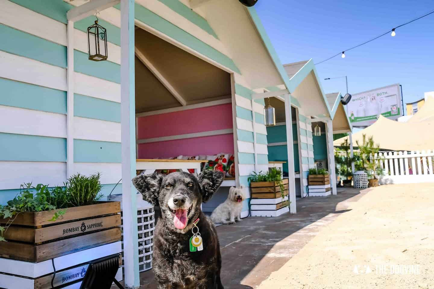 Dog-Friendly Neverland Beach Club - All You Need To Know 2