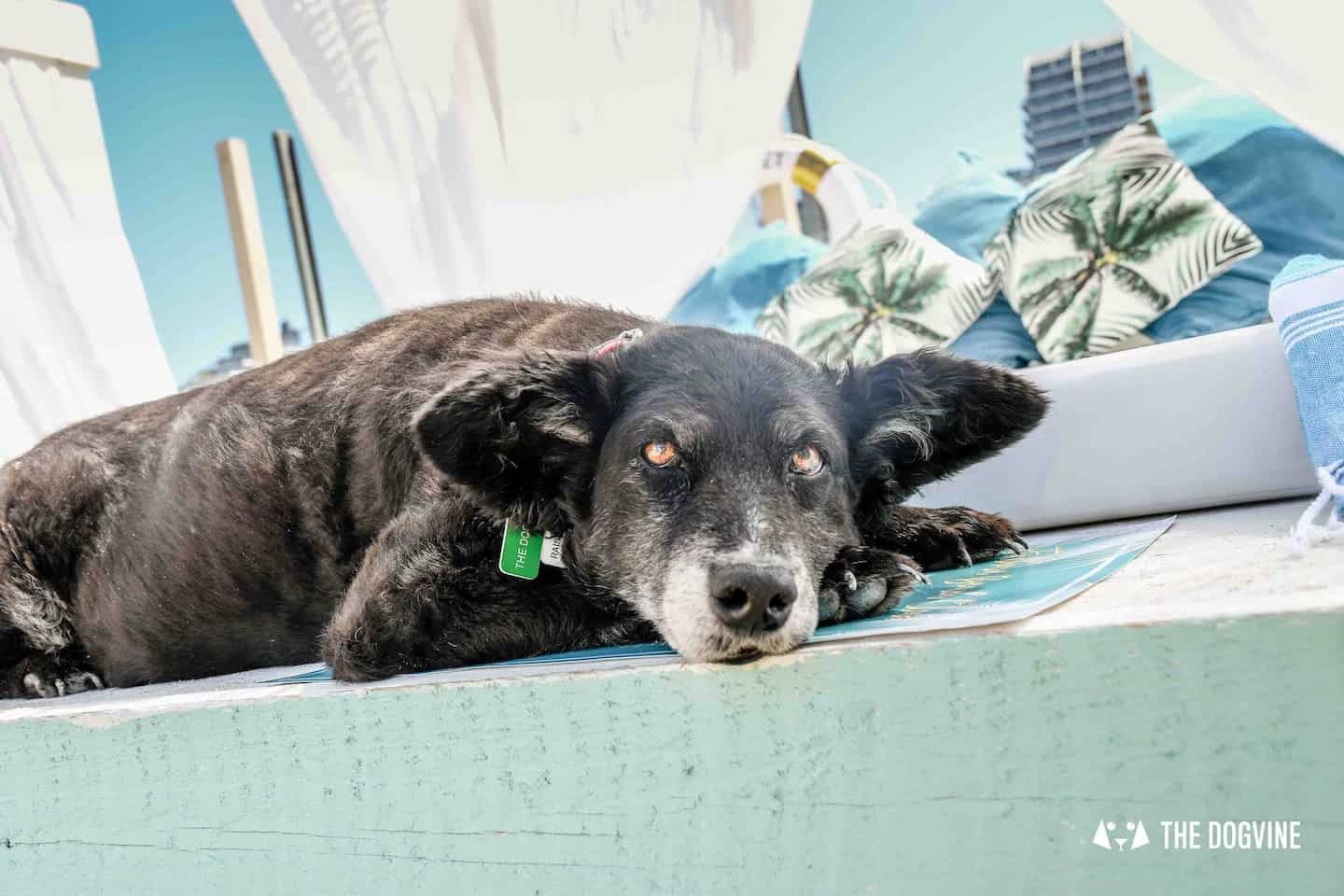 Dog-Friendly Neverland Beach Club - All You Need To Know 27
