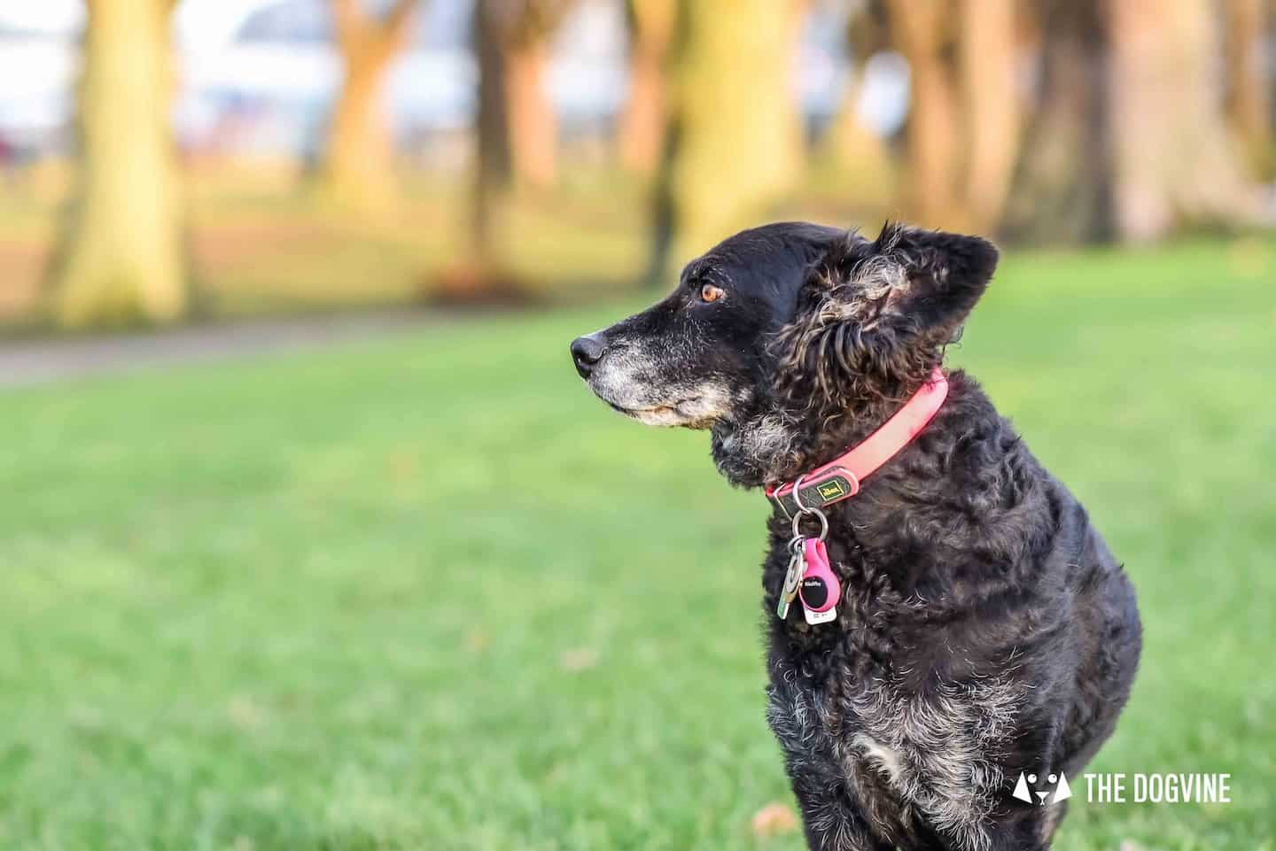 How To Help Your Dog Get Fit - PoochPlay Dog Activity Tracker Review 35