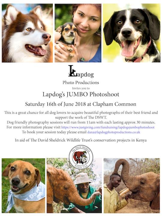 London Dog Events - Lapdog's Jumbo Photoshoot 4