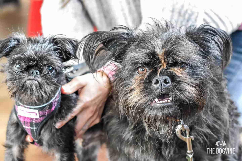 London Dog Events Narrowboat Doggy Brunch June 2018