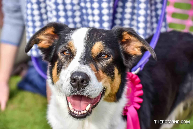 London Dog Events - South Park Fun Dog Show - London Dog Shows