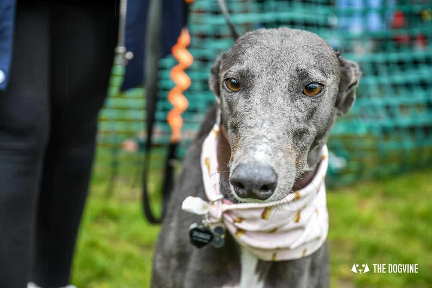 London Dogs At The Great Hampstead Bark Off 2018 104